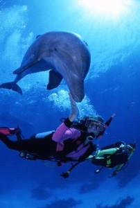 Bottlenose dolphin and divers