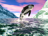dolphin_puzzle_image_3