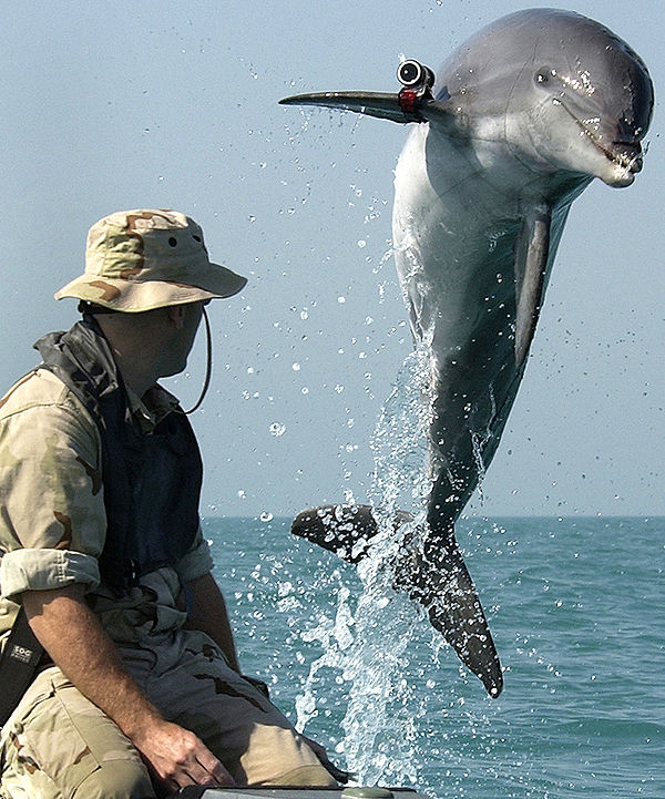 Dophins_in_the_Military