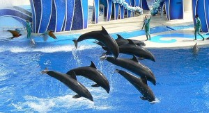 """Performing bottlenose dolphins - from left to right Marble, Porter, Jensen, Starbuck, Baretta, and Clyde - and blue macaws at SeaWorld Orlando's one of a kind show, """"Blue Horizons""""."""