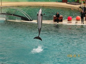 Bottlenose Dolphins in Marineland d'Antibes in France
