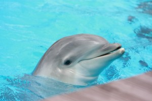 dolphin reproduction facts