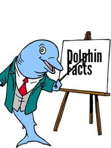 Dolphin teacher