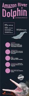 Amazon river dolphin infographic