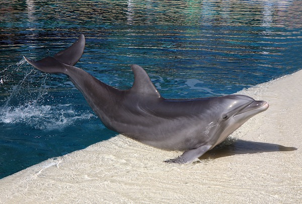 Bottlenose-Dolphins-in-Aquarium