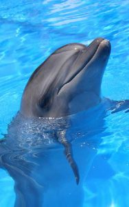 Characteristics of Bottlenose dolphins.