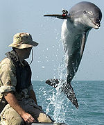 Dophins_in_the_Military_thumb