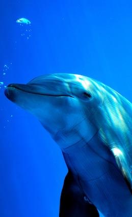 Amazing Bottlenose Dolphin Facts
