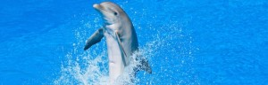 dolphin playing in the pool