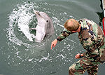 Military Trained Dolphin