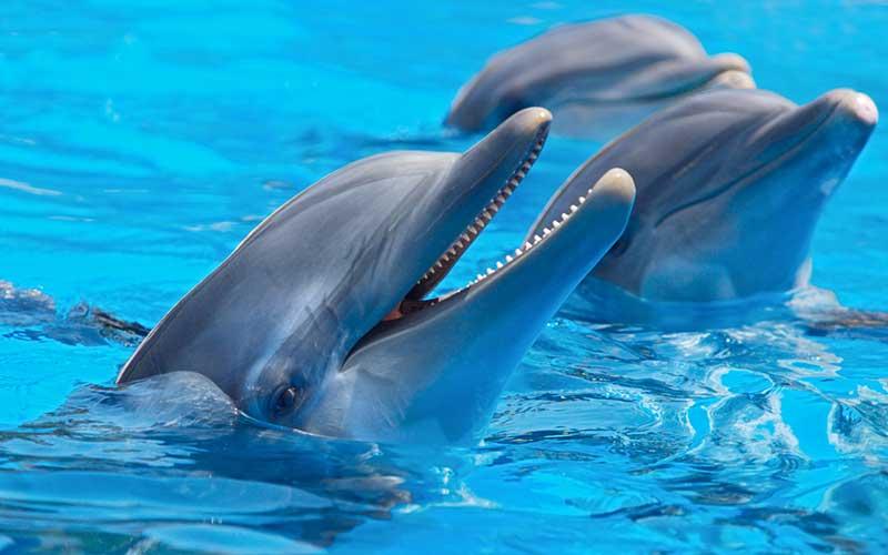 Dolphin Physiology