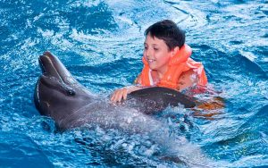 Dolphin Assisted Therapy.