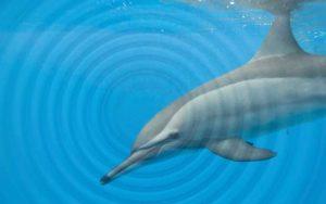 Dolphin sound diversity.