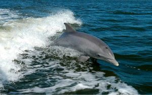 Friendly dolphins.