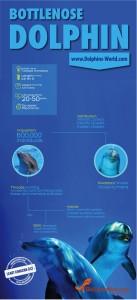 Bottlenose dolphin infographic