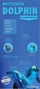 Tursiops- infographic