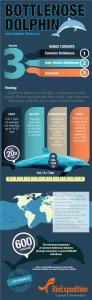 Bottlenose dolphin genus infographic