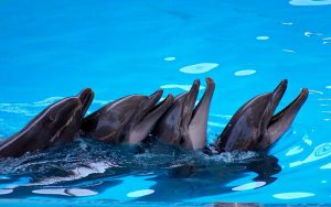 Dolphins in captivity.