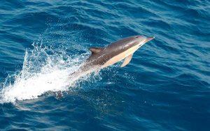 characteristics_dolphin