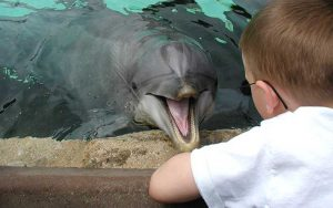 Dolphin communication.