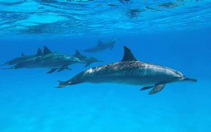 Conservation of dolphins.