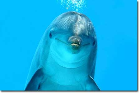 Full Movie Dolphin Tale 2 For Free