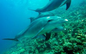 Dolphin species.