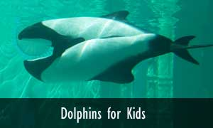dolphin facts and information - Pics Of Dolphins