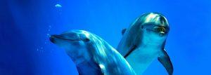 dolphins-main2