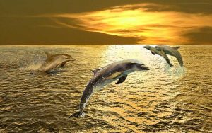 The Dolphins of Oceanus by John Hoopes.