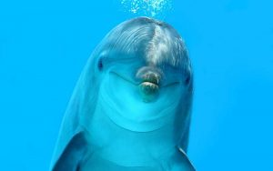 bi-sonar of dolphins.