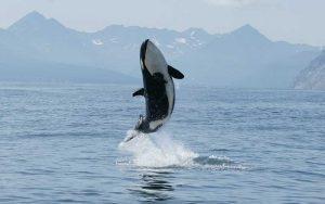 Habitat of dolphins.