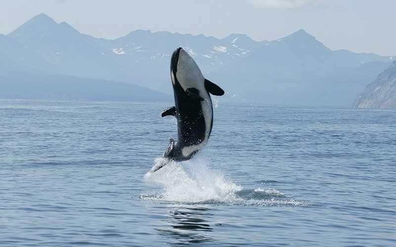 Dolphin Habitat and Distribution