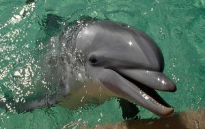 Marine mammal program.