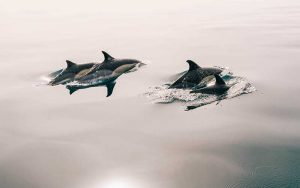 Tips for photographing dolphins.