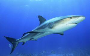 Dolphin enemies.