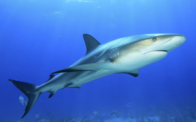 Dolphin Predators