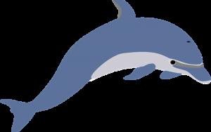 Datos sobre delfines para niños.
