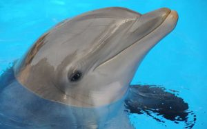 Sensory perceptions of dolphins.