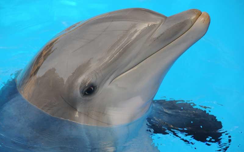 Dolphin Senses