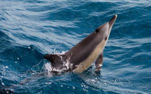 Linguistic studies of dolphin.