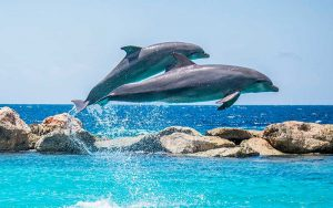 Dolphin taxonomy.