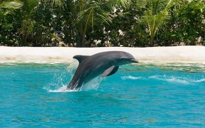 43 species of dolphins.