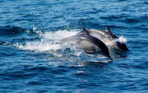 Tours to watch dolphins.