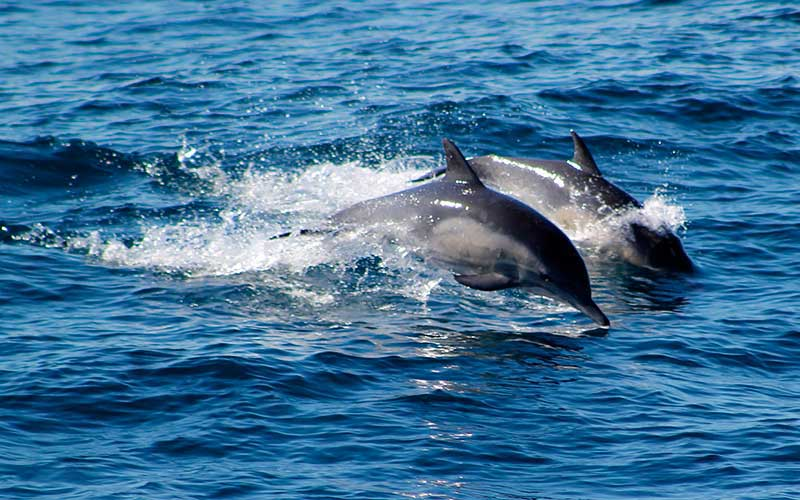 Dolphin Watching Tours