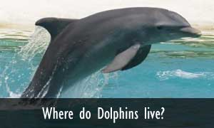 Dolphin Facts and Information - photo#33