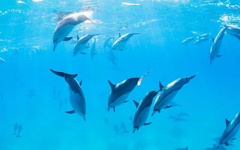 Freedom of dolphins.